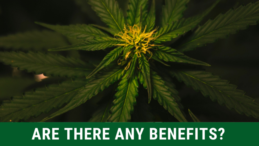 The benefits of smoking marijuana while studying.